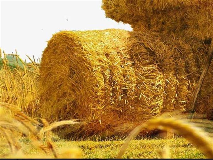 """استثمارات بقيمة 217 مليون يورو لتحويل """" قش الأرز """" لـ ألواح خشبية """""""