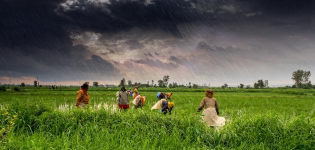 الزراعة: 123 ألف فدان مزروعة بالفول البلدى وحملة قومية لزيادة الإنتاج