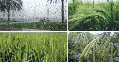 """""""الزراعة"""": إضافة 2 مليون فدان للرقعة الزراعية منها مليون بالدلتا الجديدة"""