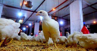وزير الزراعة يعلن موافقة الإمارات على استيراد الدواجن المصرية المصنعة ومنتجاتها