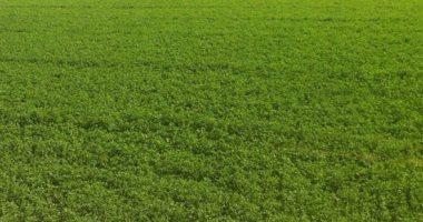 تنمية الريف المصرى: أنفقنا 3.5 مليار جنيه للبنية التحتية لزراعة 1.5 مليون فدان