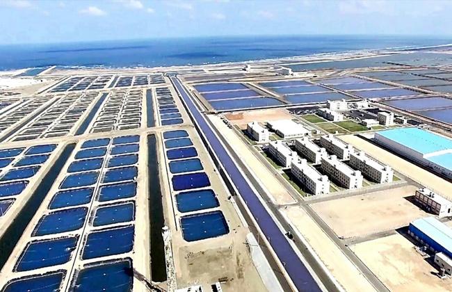 إنشاء المزارع السمكية  بركة غليون بمحافظة كفر الشيخ
