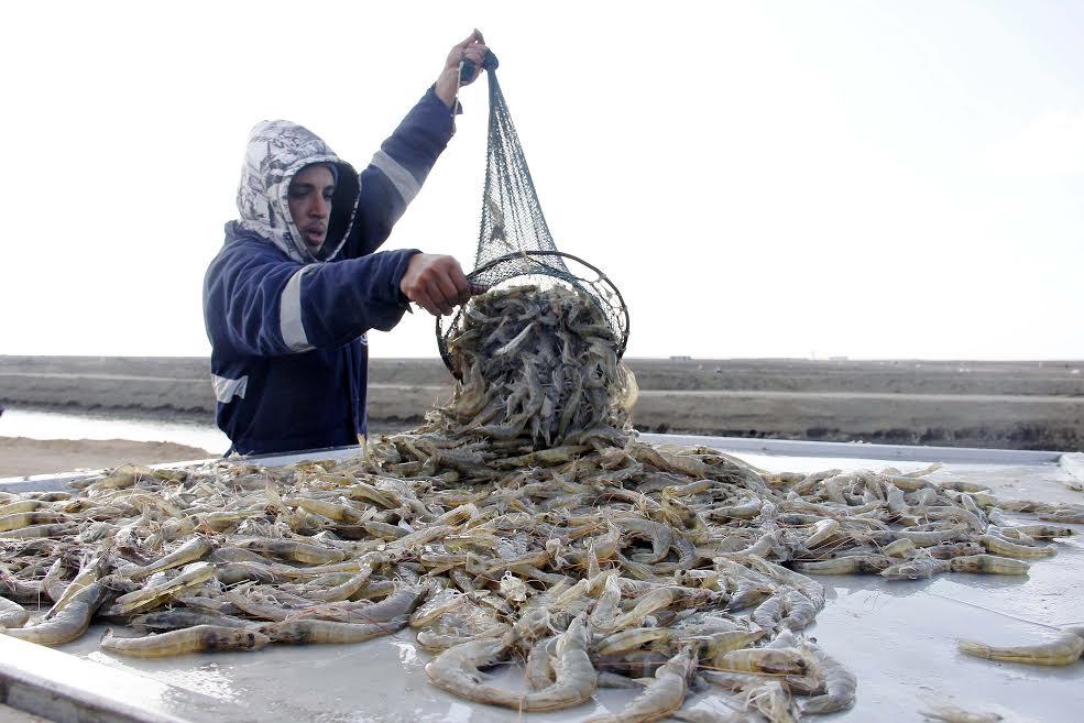 مشروع الاستزراع السمكى شرق قناة السويس