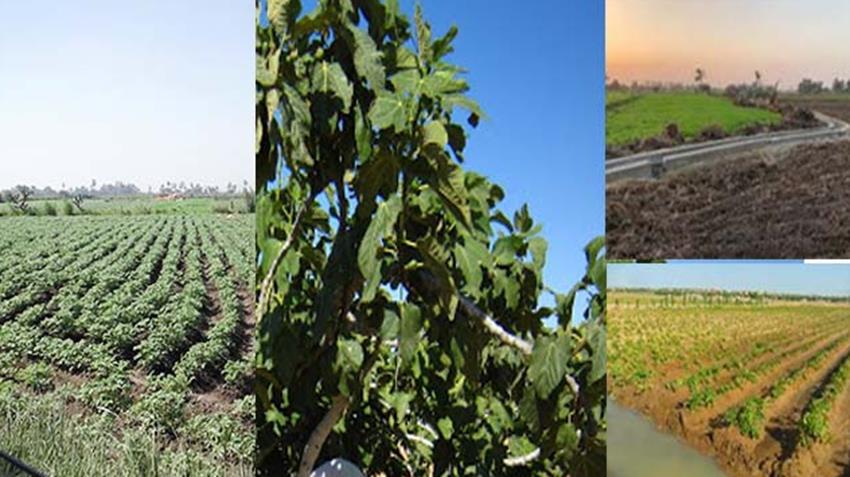 تطوير التنمية الريفية بمحافظتي المنيا والفيوم