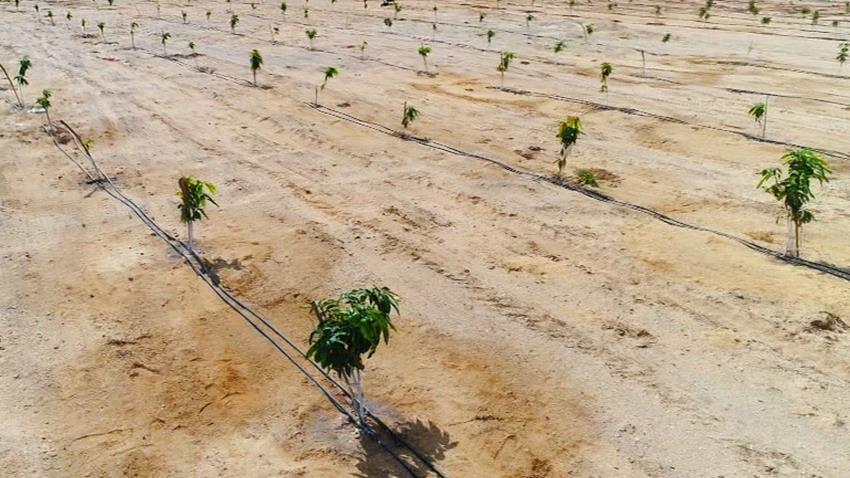 مزرعة قرية الأمل للزراعات المحمية