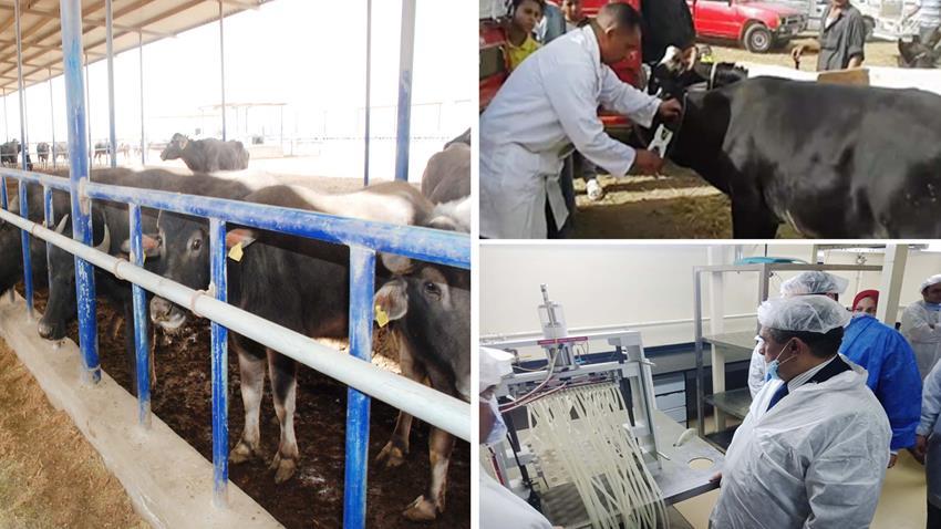 تطوير مصنع لإنتاج لقاحات حيوانات المزرعة بجميع المحافظات