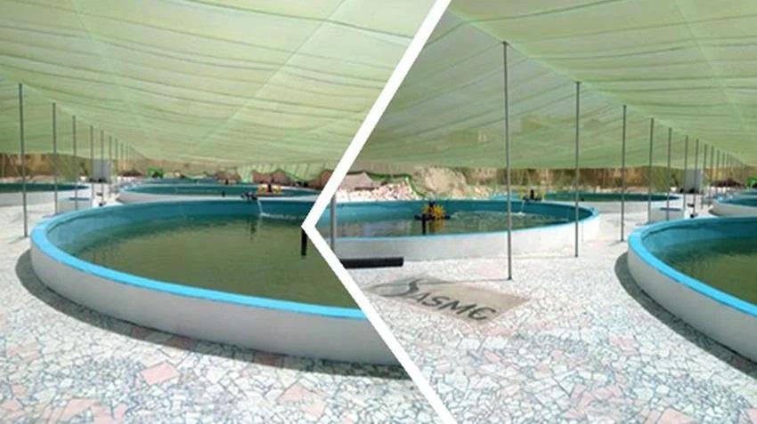 إنشاء مزرعة سمكية بحرية بمفرخ الكيلو ٢١ بمحافظة الإسكندرية