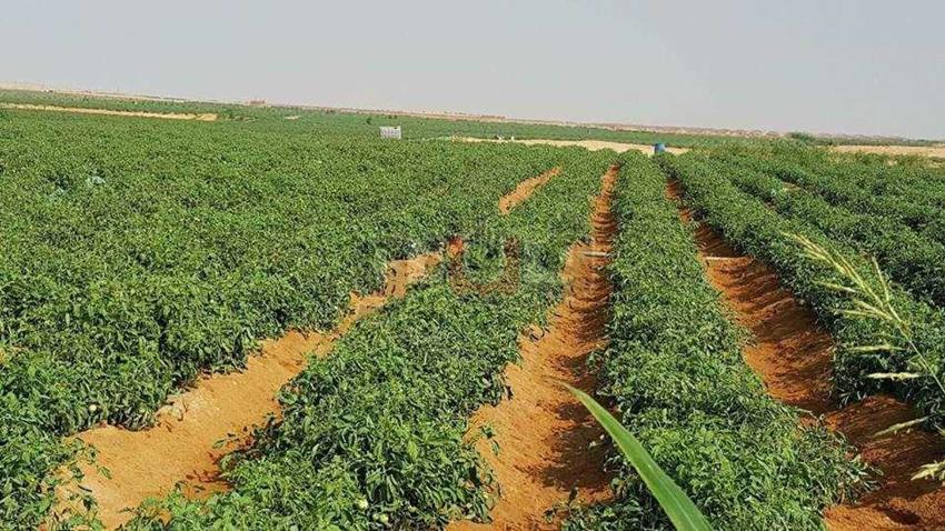 مشروع استصلاح عشرة آلاف فدان بالفرافرة بمحافظة الوادي الجديد