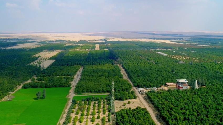 مشروع زراعة ١٦٤٠ فدانًا شرق الإسماعيلية