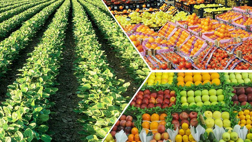 تطوير الأعمال الزراعية وقدرات المزارعين بالريف المصري بمحافظات مختلفة
