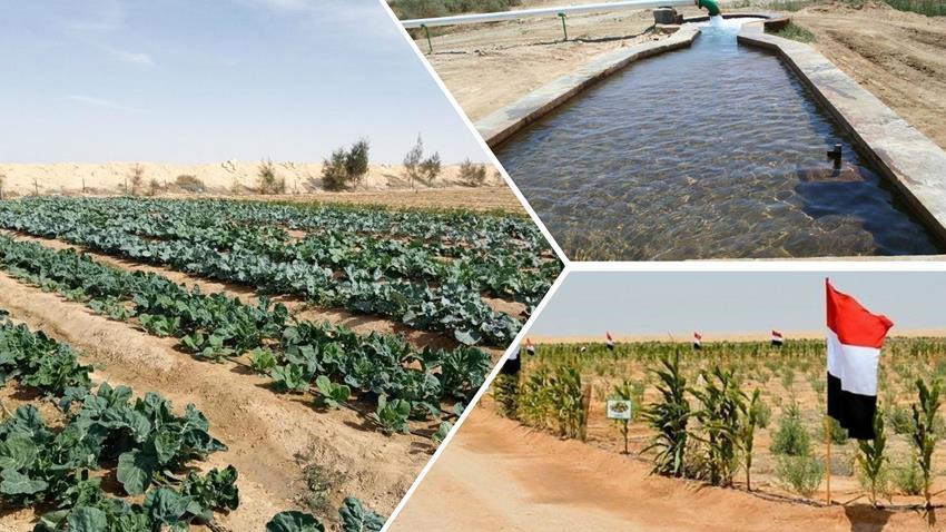 إنشاء ١٣ تجمع زراعي بمحافظتي شمال وجنوب سيناء