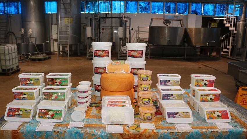 إنشاء مصنع إنتاج الجبن بسوهاج وأسيوط
