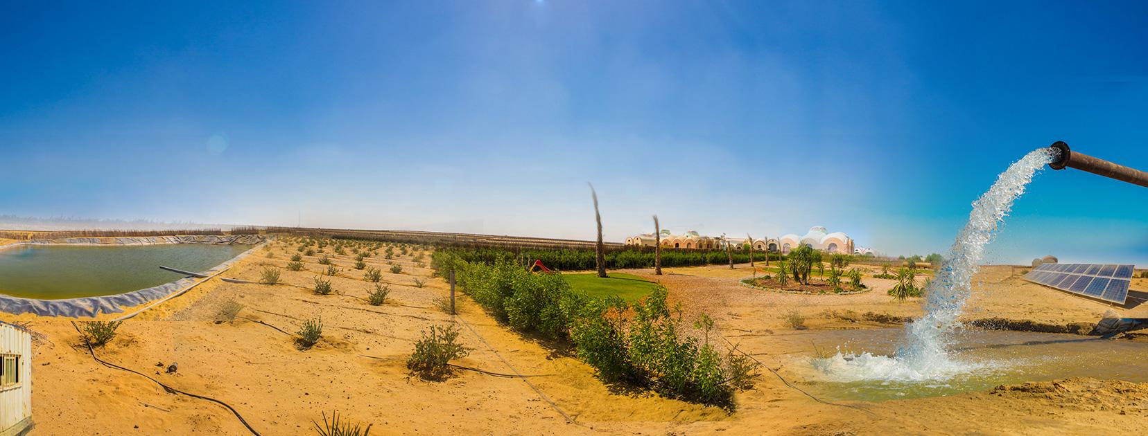 التنمية الريفية بصعيد مصر