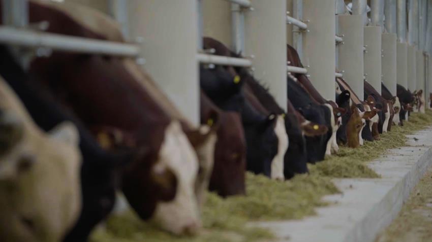 مجمع الإنتاج الحيواني رقم ٥ بالنوبارية