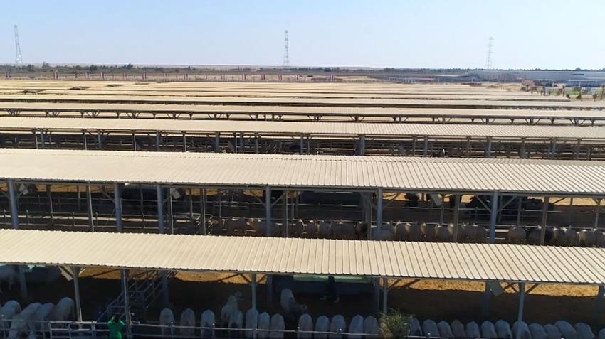 مجمع الإنتاج الحيواني رقم ٨ بمحافظة الفيوم