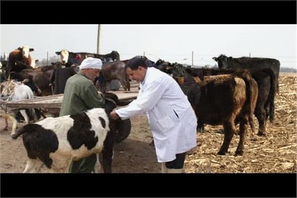 مليون رأس ماشية