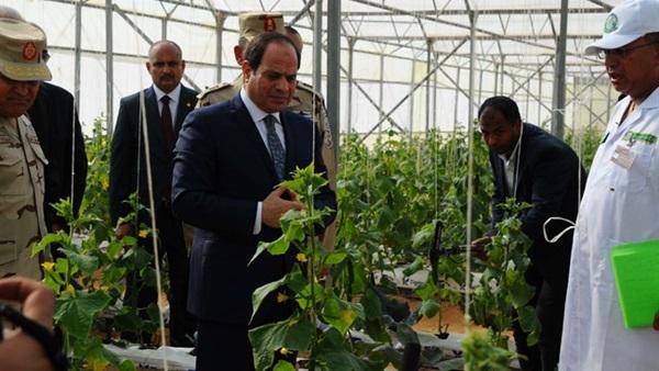 مشروع إنشاء 100 ألف صوبة زراعية