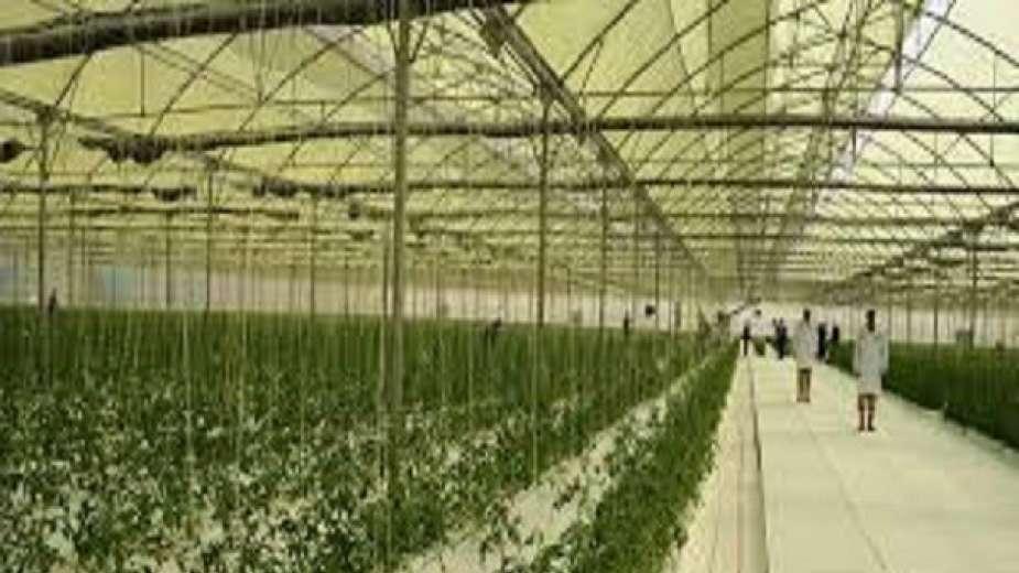 مشروع الصوب الزراعية فى قاعدة محمد نجيب العسكرية