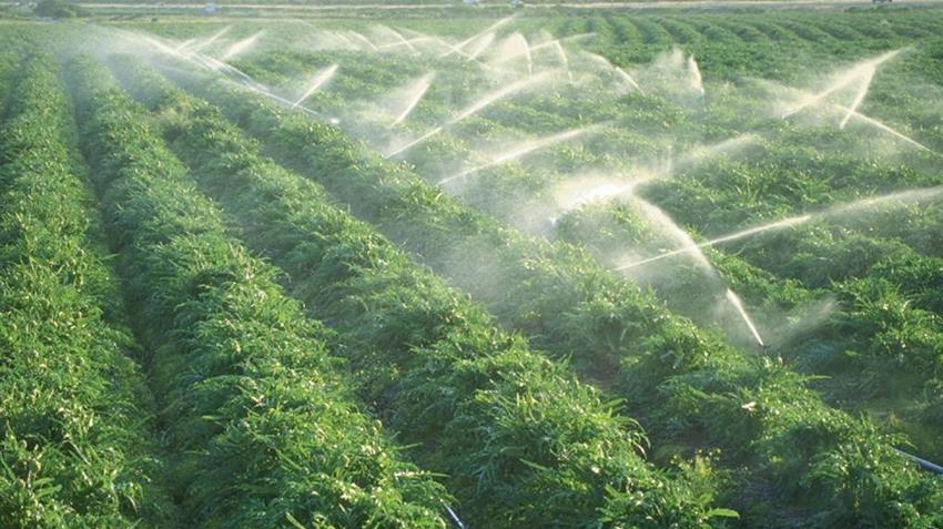 استصلاح وزراعة ٢١ ألف فدان بالفرافرة