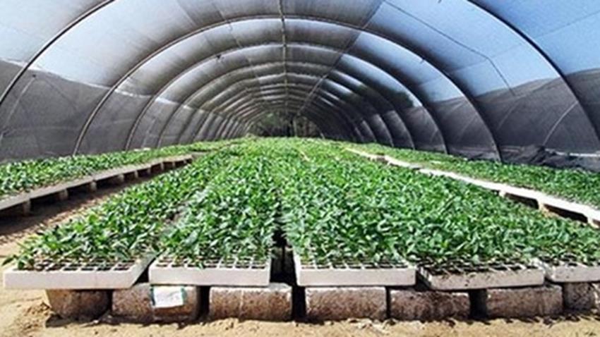 الصوب الزراعية بموقع أبو سلطان بالإسماعيلية